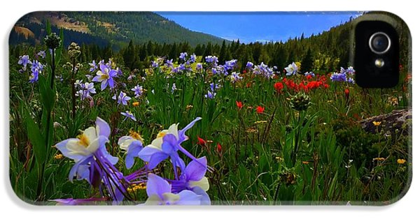 IPhone 5 Case featuring the photograph Mountain Wildflowers by Karen Shackles