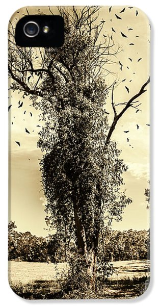 Mourning Tree IPhone 5 Case by Jorgo Photography - Wall Art Gallery