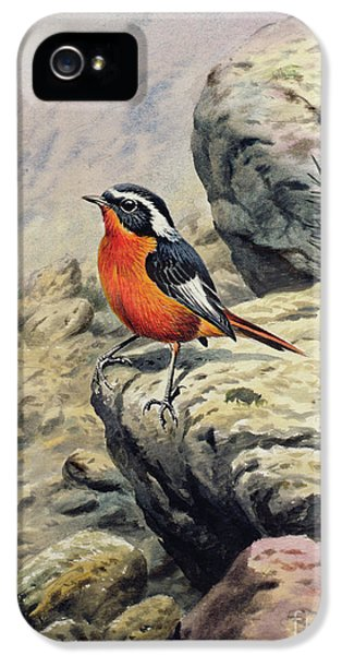 Moussier's Redstart IPhone 5 Case by Carl Donner