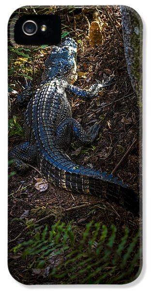 Crocodile iPhone 5 Case - Mr Alley Gator by Marvin Spates