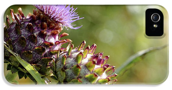 Mr And Mrs Thistle  IPhone 5 Case by Jeremy Lavender Photography