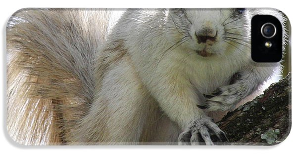 Mr. Inquisitive II IPhone 5 / 5s Case by Betsy Knapp