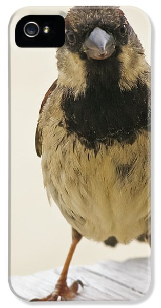 Mr Sparrow IPhone 5 Case by Terri Waters