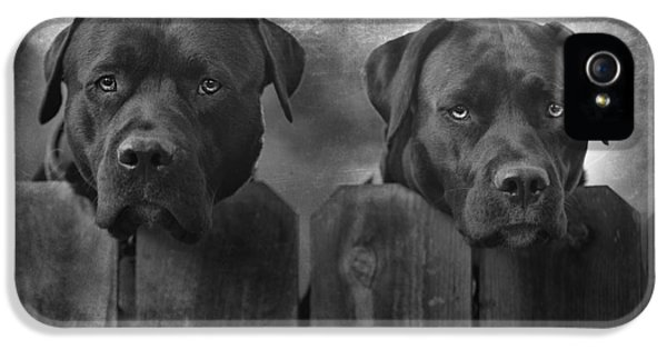 Bull iPhone 5 Case - Mutt And Jeff by Larry Marshall