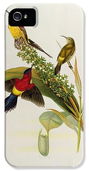 Nectarinia Gouldae IPhone 5 Case by John Gould