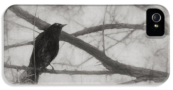 Nevermore IPhone 5 Case by Melinda Wolverson