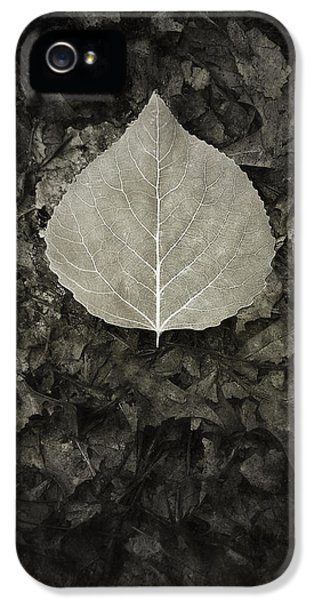 New Leaf On The Old IPhone 5 Case by Scott Norris