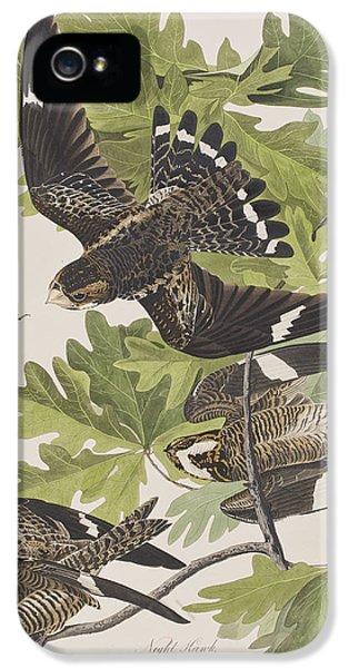 Night Hawk IPhone 5 Case by John James Audubon