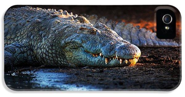 Nile Crocodile On Riverbank-1 IPhone 5 Case by Johan Swanepoel