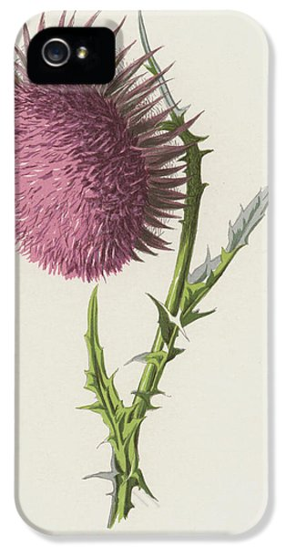 Nodding Thistle IPhone 5 Case