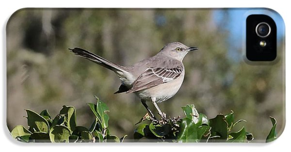 Northern Mockingbird IPhone 5 Case by Carol Groenen