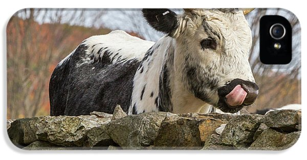 IPhone 5 Case featuring the photograph Nosey by Bill Wakeley