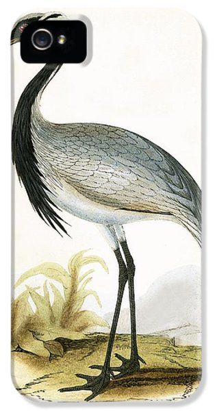 Numidian Crane IPhone 5 / 5s Case by English School