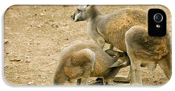 Kangaroo iPhone 5 Case - Nursing Time by Mike  Dawson
