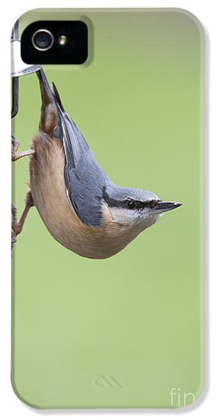 Nuthatch IPhone 5 Case by Tim Gainey