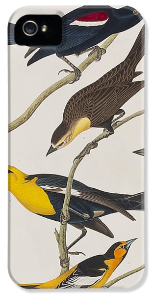 Starlings iPhone 5 Case - Nuttall's Starling Yellow-headed Troopial Bullock's Oriole by John James Audubon