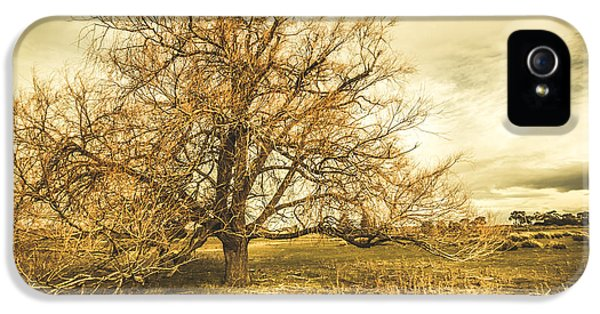 Oatlands Autumn Tree IPhone 5 / 5s Case by Jorgo Photography - Wall Art Gallery