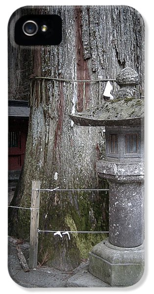 Old Tree iPhone 5 Cases - Old Tree iPhone 5 Case by Naxart Studio