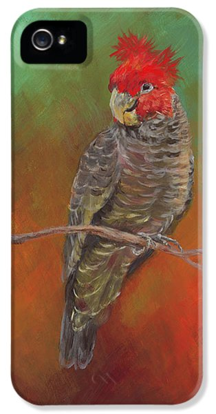 Cockatoo iPhone 5 Case - Ollie by Kirsty Rebecca