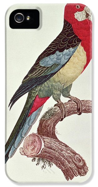 Macaw iPhone 5 Case - Omnicolored Parakeet by Jacques Barraband