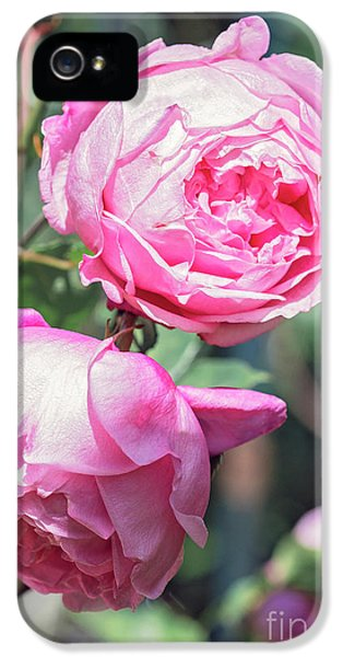 IPhone 5 Case featuring the photograph One Bold, One Bashful by Linda Lees