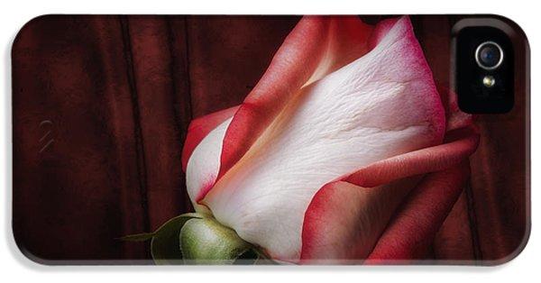 One Red Rose Still Life IPhone 5 Case by Tom Mc Nemar
