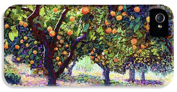 Orange Grove Of Citrus Fruit Trees IPhone 5 Case