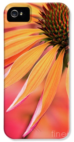 Orange Passion IPhone 5 Case