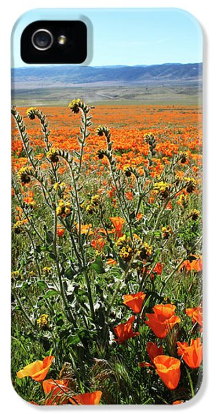 Orange Poppies And Fiddleneck- Art By Linda Woods IPhone 5 Case by Linda Woods