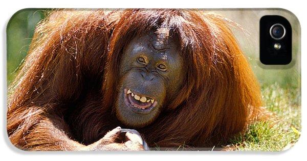 Orangutan In The Grass IPhone 5 Case by Garry Gay