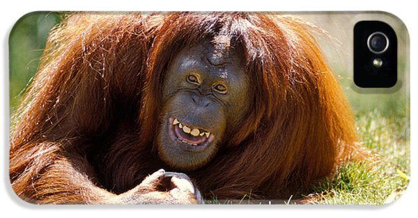 Orangutan In The Grass IPhone 5 Case by Garry Gay
