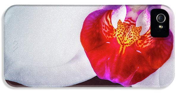 Orchid iPhone 5 Case - Orchid Up Close by Tom Mc Nemar