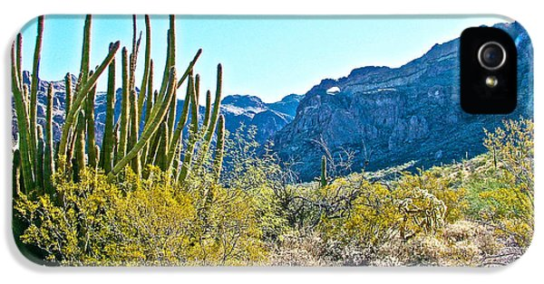 Organ Pipe Cactus In Arch Canyon In Organ Pipe Cactus National Monument-arizona  IPhone 5 Case by Ruth Hager