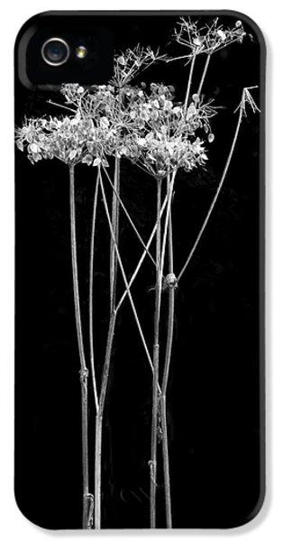 Constituent iPhone 5 Case - Organic Enhancements 7 by Paul Davenport