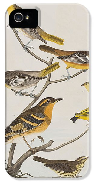 Orioles Thrushes And Goldfinches IPhone 5 / 5s Case by John James Audubon
