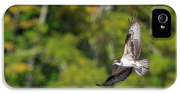 Osprey IPhone 5 Case by Bill Wakeley