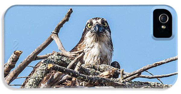 Osprey Eyes IPhone 5 Case by Paul Freidlund