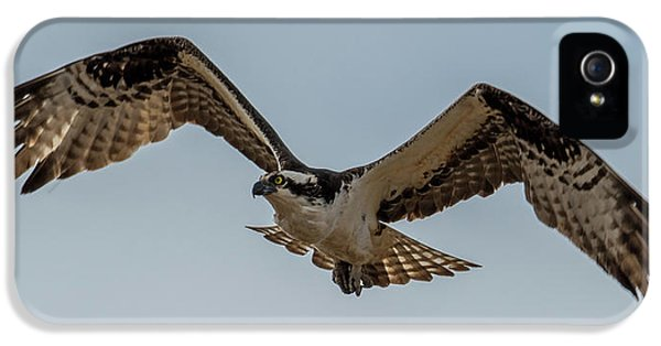 Osprey Flying IPhone 5 Case by Paul Freidlund