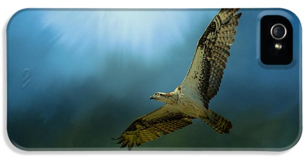Osprey In The Evening Light IPhone 5 Case by Jai Johnson