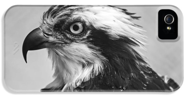 Osprey iPhone 5 Case - Osprey Monochrome Portrait by Chris Flees