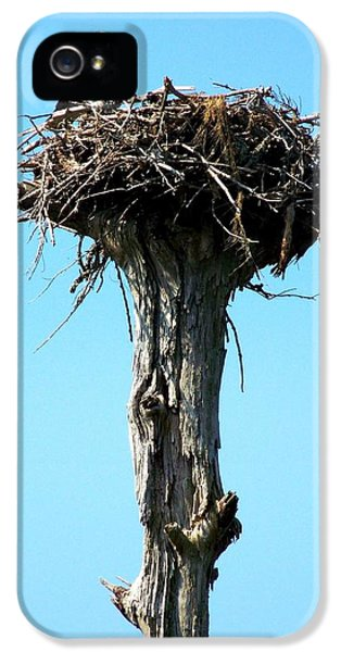 Osprey Point IPhone 5 Case by Karen Wiles