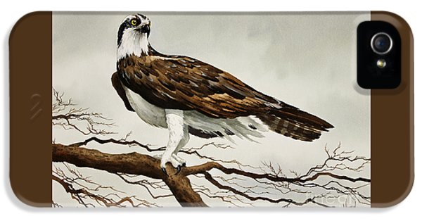 Osprey Sea Hawk IPhone 5 Case by James Williamson