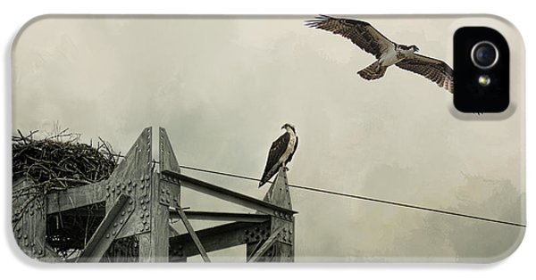 Ospreys At Pickwick IPhone 5 Case by Jai Johnson