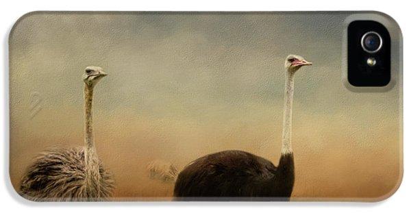Ostrich Couple IPhone 5 Case by Jai Johnson