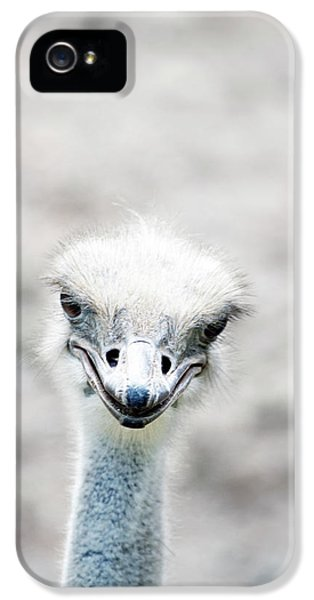 Ostrich IPhone 5 Case