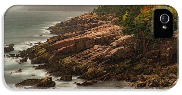 Otter Cliffs IPhone 5 Case