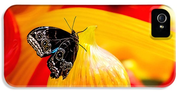 Owl Eye Butterfly On Colorful Glass IPhone 5 / 5s Case by Tom Mc Nemar