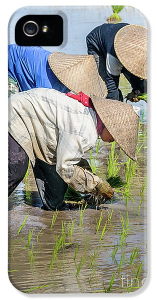 Paddy Field 2 IPhone 5 Case by Werner Padarin
