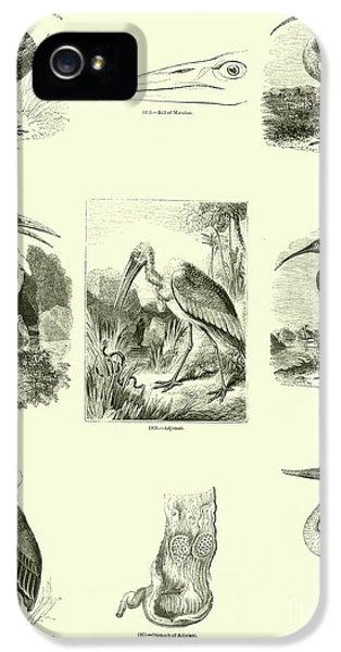 Page From The Pictorial Museum Of Animated Nature  IPhone 5 Case