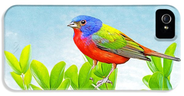 Bunting iPhone 5 Case - Painted Bunting by Laura D Young